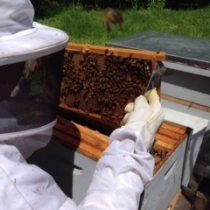 2019 beekeeping at Bible Street