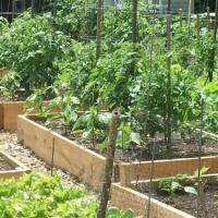 cropped-garden_6-19-12_sm