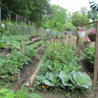 gardens-growing-1-11
