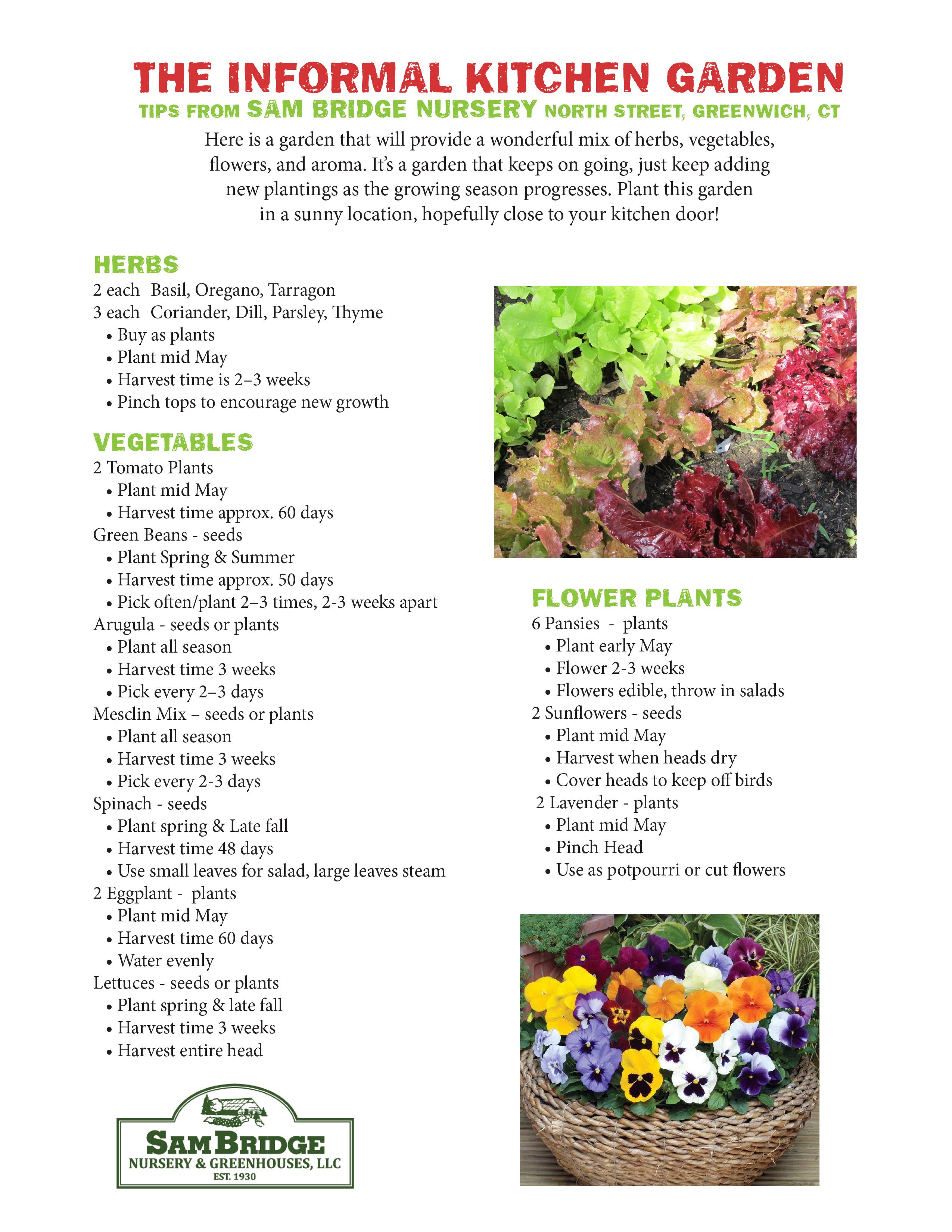 Informal Kitchen Garden - Sam Bridge - Greenwich Community Gardens